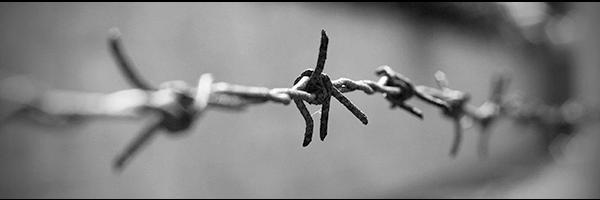 Kirk Elliott PhD barbed wire